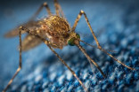 Mosquito season: Is DEET a safe repellant?