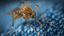 10 facts on how mosquitoes pose a threat to half the world