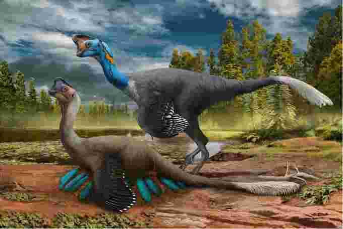 Oviraptorosaur drawing/Zhao Chuang