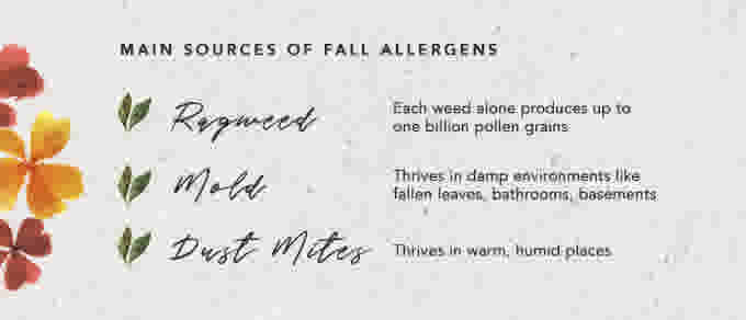 WN Allergies Fall Infographic ENG 2