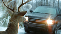 Drive safe: Tips to avoid wildlife collisions