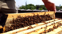The incredible ways bees deal with all types of weather