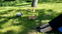 Exploding bunny population in Calgary likely caused by abandoned pets
