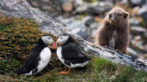 Glimmer of hope in 2021 for these vulnerable species in Canada