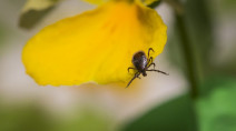 Manitoba researchers warn of rare but deadly complication of Lyme disease
