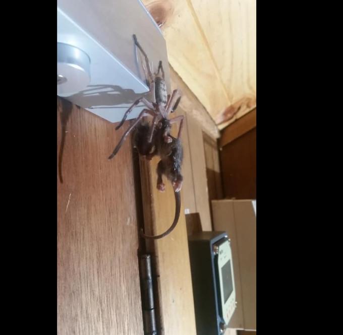 The Weather Network - Man returns to ski lodge, finds massive spider