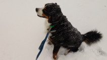 Photos: Animals enjoying the snow