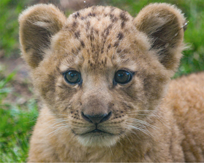 The Weather Network Meet Bahati The Lion Cub Used As The
