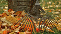 Not so fast: Here's why you SHOULDN'T rake leaves in the fall
