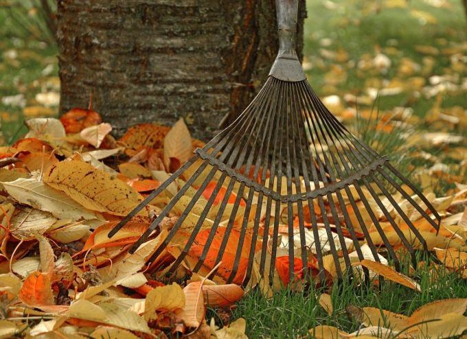 Raking leaves/Pixabay