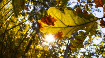 Ontario: Is summer over? Tumbling temperatures give a taste of early fall