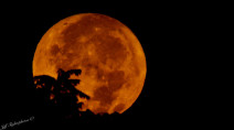 EYES UP! A rare Harvest Moon will grace our night sky this week