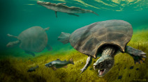 Car-sized prehistoric turtle was built for battle
