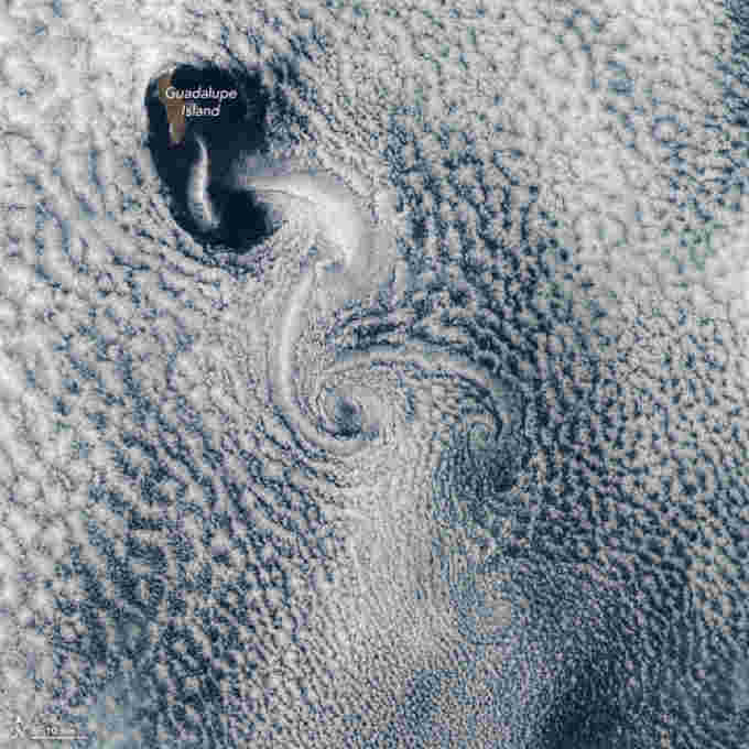 Vortices on the lee side of Guadalupe Island