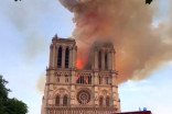 180,000 bees living in Notre Dame's roof survive fire