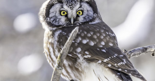 What a hoot! Rare owl sighting captured in Calgary