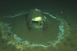25,000 barrels containing DDT found at bottom of Pacific