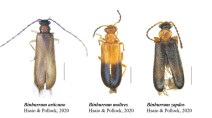 Meet the three beetles named after Pokémon