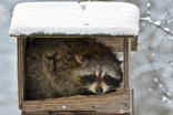 Photos: Animals hogging bird feeders