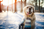 PROTECT YOUR PETS: What to do when cold weather strikes