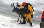Winnipeg emergency crews rescue deer after tumble through ice on Red River