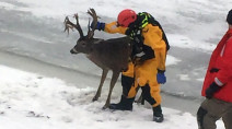 Deer ice rescue a reminder to us all to be extra cautious on rivers, lakes