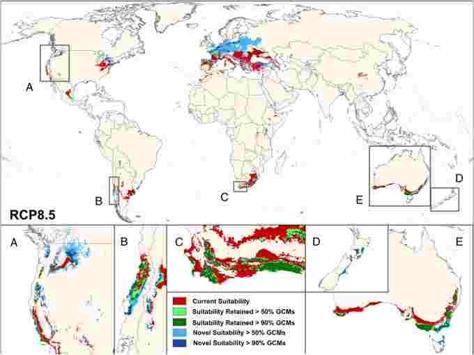 Wine growing suitability climate change PNAS