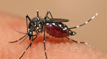 First batch of genetically modified mosquitoes released in Florida