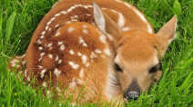 Fawn napping: What it is and why you need to avoid it