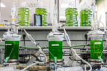 Here's how UBC researchers are maximizing the potential of microalgae