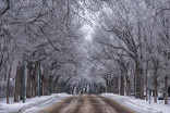 This winter phenomena creates a spectacular scene