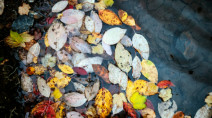 Rainiest week in B.C. since February, fall brings hundreds of millimetres