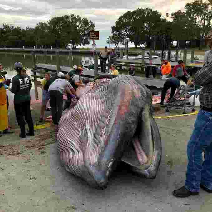 Precedentemente una balena dell'orgoglio (ora una balena del riso)