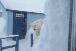 Canadian couple survive 'horrifying' polar bear encounter