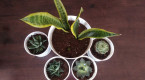 The ultimate guide to caring for houseplants in winter
