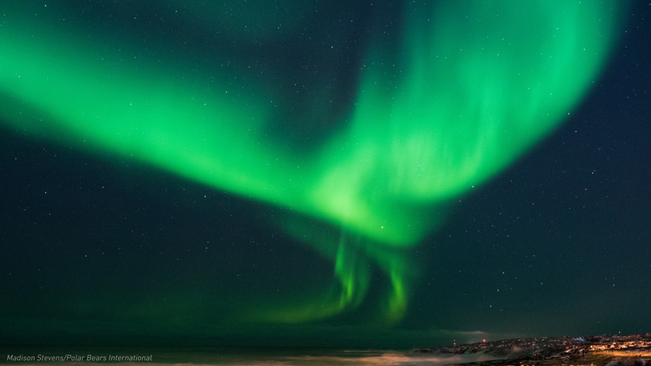 Watch Churchill's Northern Lights, live, from anywhere in the world