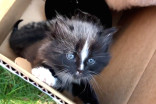 A happy ending for a litter of feral kittens in Halifax