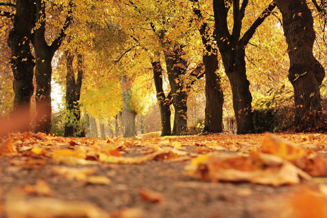 The blob is back: Here's how it could impact fall weather
