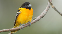 5 backyard birds you can find in Canada
