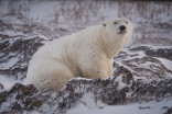 'Their fur isn't white': 5 facts about polar bears