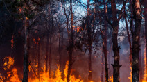 Quebec in worst forest fire year in a decade, COVID-19 partly to blame