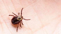The countdown to peak tick season has arrived