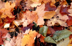 Driving on leaves can be as dangerous as driving on ice, here's why