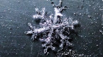 Macro photography reveals remarkable complexities of snowflake structures