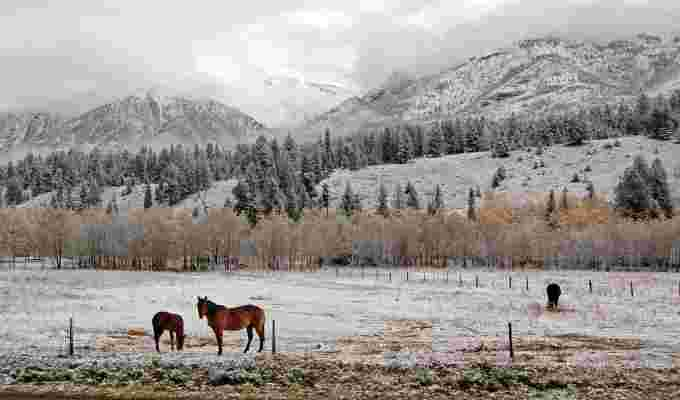 https://images.twnmm.com/c55i45ef3o2a/3WTdJoJGPecKGBlNP6wi5w/740cbb6b74b3037cd65bc45fd0183af9/horses_-_Bruce_Dalgas_-_Canmore__Alberta_-_December_2__2012.jpg?fit=scale&w=600&q=80&fm=jpg&h=400