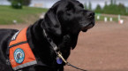 These dogs help keep Alberta free of invasive mussels