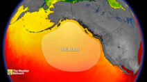 Why 'The Blob' can be a real terror for marine life
