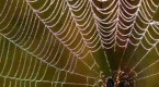 Listen to music made by spiderwebs