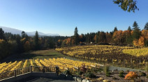 Cowichan Valley becomes B.C.'s newest official wine region