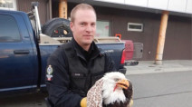 Bald eagle, presumed dead, revives in back seat, shocking driver